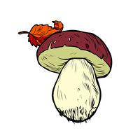 White mushroom boletus