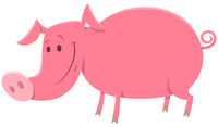 pig or piglet animal character cartoon illustration