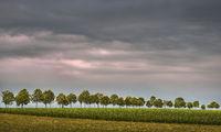 The tree row
