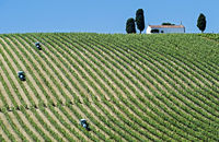 Mechanized fieldwork with a tractor on a plantation with vertical vine rows, Portugal