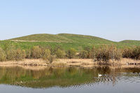 Biotopsee lake with swan and Arkenberge hill in Berlin in spring