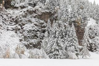Snowy winter forest in Valle Aurina