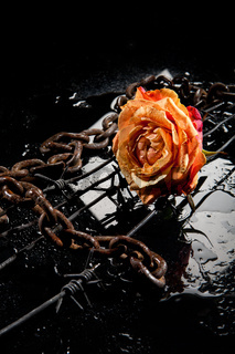 Rose, Chain And Barbed Wire