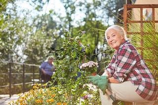 Senior Frau beim Einpflanzen von Blumen