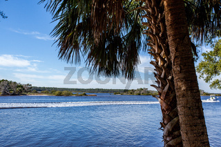 Palm Tree Beach Coast Tropical Weather Ocean Horizon Vacation Summer Sun Destination Landscape