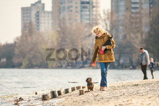Woman plays with dogs. Pets and dogs training and educating dogs. Companion pets concept. Companion pets concept. dog lover.Caucasian lady with three dogs breed dachshund and hands toy terrier