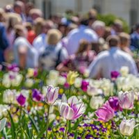 Square frame Close up of tulips and small flowers with people and building in the background
