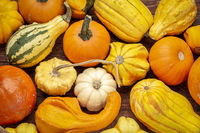 background of winter squash and gourds