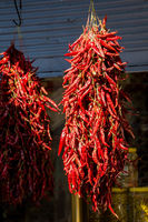 Bundles of red  peppers dry in the sun