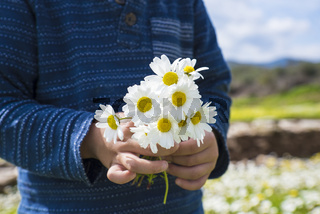 Little Child Is Holding A Bouquet Of Daisy Flower