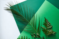 Set of green palm leaf, fern and twigs on a double green cardboard on a gray background with copy space. Foliage composition for layout. Flat lay