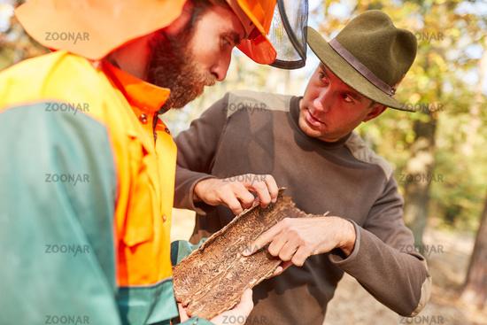 Förster hilft Waldarbeiter bei Borkenkäfer Erkennung