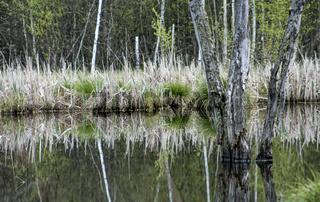 Moorsee im Schwenninger Moos