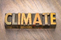 climate word in wood type