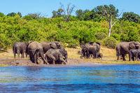 Eephants crossing river