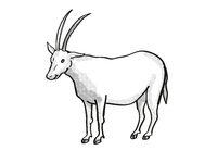 scimitar oryx or scimitar-horned oryx Endangered Wildlife Cartoon Mono Line Drawing