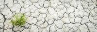 dry and cracked desert soil background