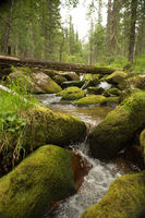 Water flowing over stones overgrown with moss. A mountain stream