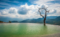 Tree in the water in Hierve el Agua, natural rock formations in the Mexican state of Oaxaca