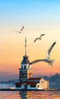 Maiden Tower and seagulls