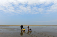 pulling a handcart across the mudflats, Wadden Sea National Park, Westerhever, Germany