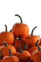 Heap of orange pumpkins