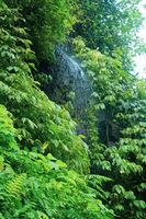 Beautiful waterfall in green tropical rain forest in Bali