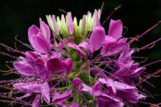 Blumen 901