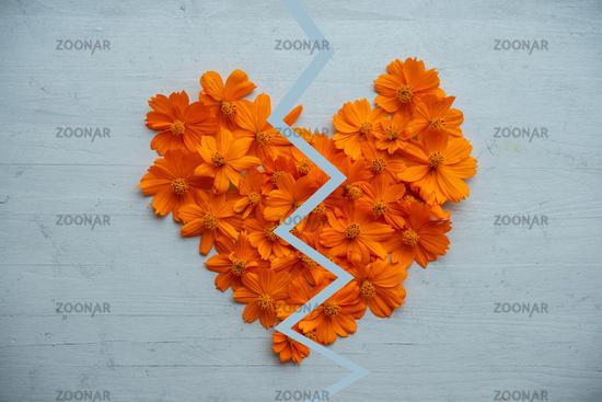 Broken heart made of orange cosmos