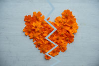 Broken heart made of orange cosmos