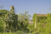 Abandoned village in Istria