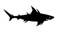 Megalodon, Giant shark, Sea monster, Aquatic mutant, Danger creature.