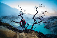 Man traveler standing near dead tree on edge of crater Ijen volcano with colorful sky at morning