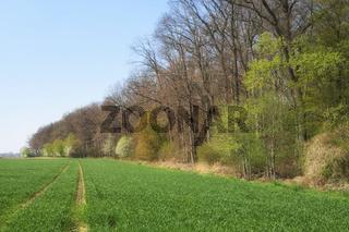 Waldrand im Frühling, Deutschland