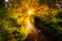 A brook at sunrise