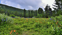 Picturesque view of blooming alpine meadow in mountain valley
