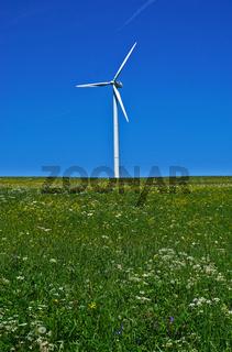 Windrad auf blühender Blumenwiese bei Melchingen, Schwäbische Alb