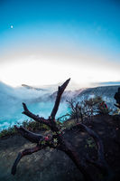 Dead trees in Ijen volcano with acid lake, Java