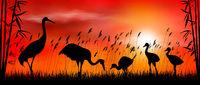 Birds cranes on sunset background