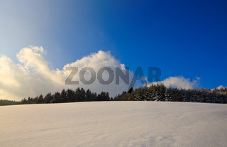 Pine trees with snow in winter . Winter background.