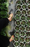 feet wear plastic sandals walk in garden