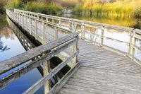 Floating Walkways at Neary Lagoon.