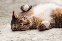 Lovely cat lies and playing on ground