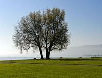 Backlit tree in a park at Lake Constance, Arbom, Switzerland