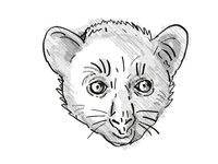 Aye-Aye or Daubentonia madagascariensis Endangered Wildlife Cartoon Retro Drawing