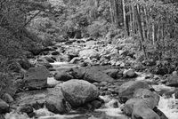 Small stream in Volcan Baru National Park Panama in black and white