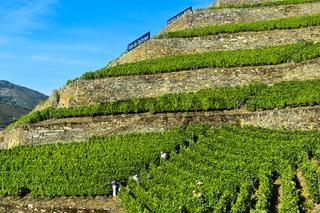 Steile Weinbergterassen auf Trockenmauern aus Naturstein