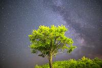 Green tree Milky way night sky
