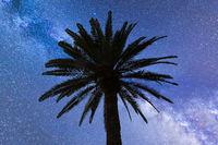 Blue Milky way falling stars palm tree
