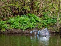 Verchromter Einkaufswagen am Ufer eeines Sees ins Wasser geschmissen.